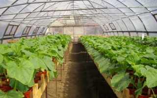 Урожайность кабачков с 1 га в открытом грунте