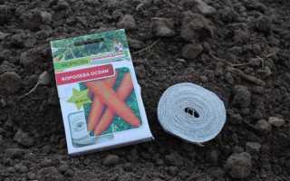 Как сажать морковь на ленту или туалетную бумагу в открытый грунт?