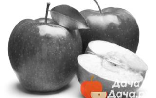 Алыча Кремень — описание сорта, фото и отзывы садоводов