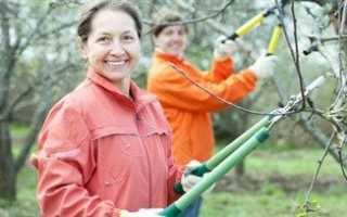 Обрезка старых яблонь весной — схема