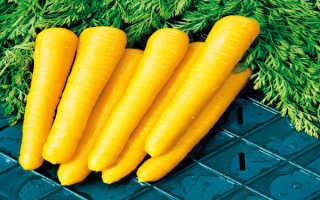 Почему морковь желтая, а не оранжевая?