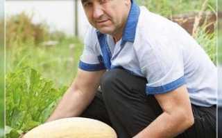 Как вырастить дыню в Ленинградской области в теплице?