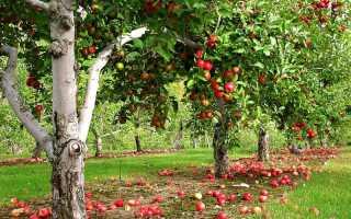Яблоня после зимы не просыпается — что делать?