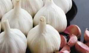 Лучшие сорта озимого чеснока для Сибири
