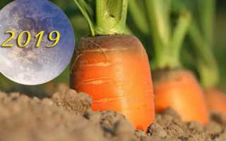 Когда лучше убирать морковь на хранение по лунному календарю?