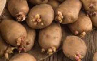 Норма высева картофеля на 1 га в кг