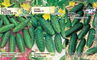 Сорта огурцов, устойчивые к пероноспорозу