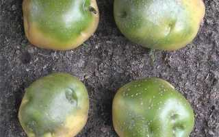 Первичная обработка картофеля — как и когда делается?