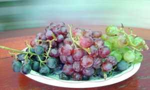 Лучшие сорта винограда для Тульской области