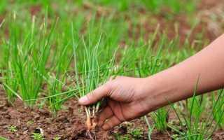 Удобрения для лука