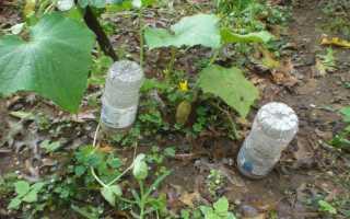 Капельный полив своими руками из пластиковых бутылок для огурцов