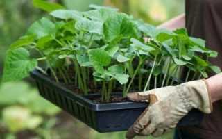 Что посадить после баклажан?