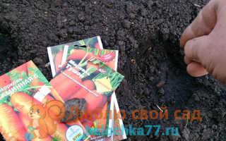 После чего сажать морковь в открытый грунт?