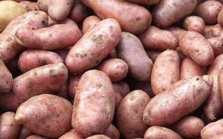 Лучшие сорта картофеля всех времен и народов