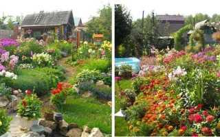 Многолетники для дачи, 40 неприхотливых и долгоживущих цветов