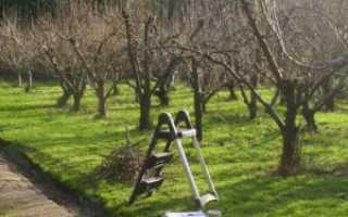 Как правильно обрезать яблоню осенью: видео