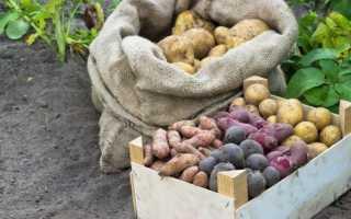 Как выбирать картошку на зиму?
