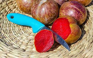 Обзор и плюсы выращивания гибридов абрикоса