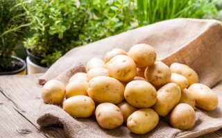 Как увеличить урожай картофеля?