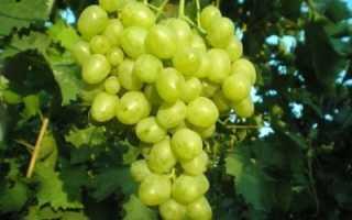Виноград Супер Экстра: описание сорта, фото и отзывы садоводов