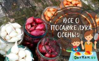 Когда сажать лук под зиму в средней полосе России?