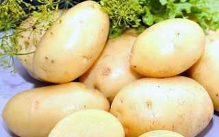 Картофель Императрица — описание сорта, фото, отзывы, посадка и уход
