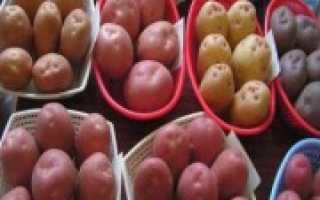 Сорта картофеля для Подмосковья