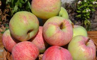 Яблоня Яблочный спас — описание сорта, фото, отзывы