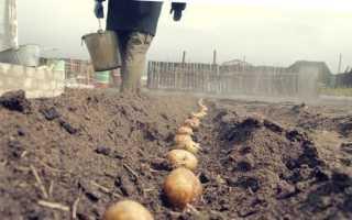 Посадка и уход за картофелем