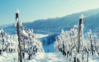 Подготовка винограда к зиме в Ростовской области