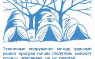 Сорта груш для Ярославской области