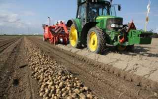 Какой урожай картофеля можно собрать с 1 сотки?