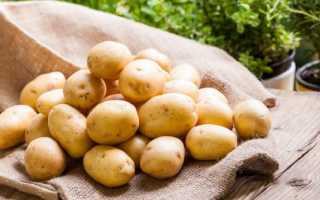 Картофель Лина — описание сорта, фото, отзывы, посадка и уход