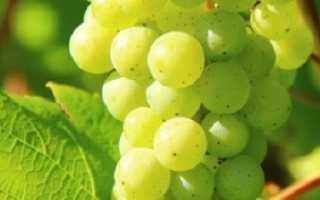 Уход за виноградом после цветения