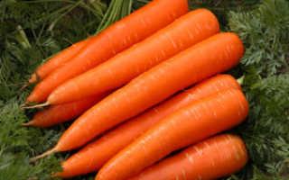 Можно ли садить морковь после лука на грядке?