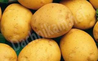 Сорвы картофеля в соответствии с буквенными фотографиями и именами описания; Для садовников