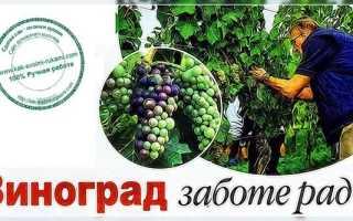 Подкормка винограда в июле