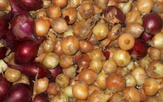 Лучшие сорта лука севка в Беларуси