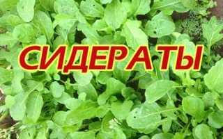 Какие сидераты посадить после лука?