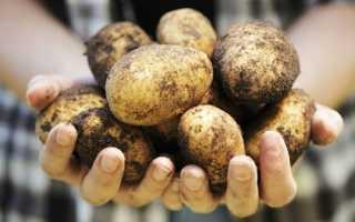 Когда закладывать картофель на хранение?