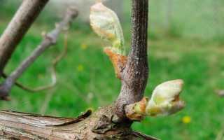 Уход за виноградом летом