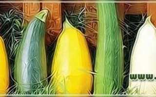 Как продлить плодоношение кабачков?