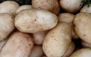 Картофель Идеал — описание сорта, фото, отзывы, посадка и уход