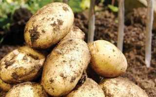 Сорта картофеля немецкой селекции