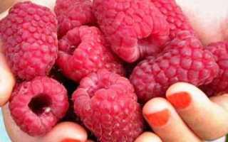 Уход и размножение кустовой малины