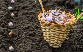 Подготовка грядки осенью для посадки чеснока под зиму