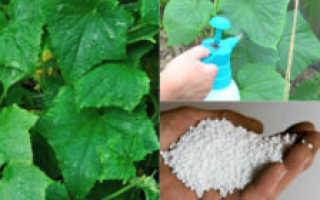Чем подкормить огурцы в теплице во время цветения и плодоношения?