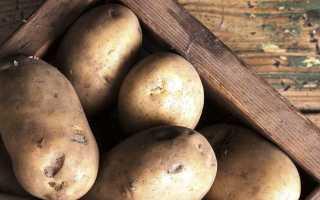 Картофель Дева — описание сорта, фото, отзывы, посадка и уход