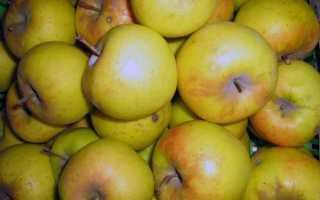 Яблоня Заря Алатау — описание сорта, фото, отзывы