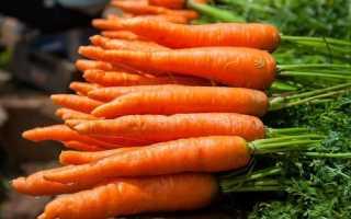 Когда убирать морковь с грядки на хранение в Беларуси?